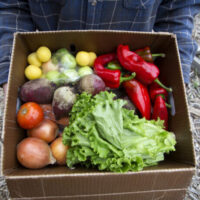 Ultra locally grown food